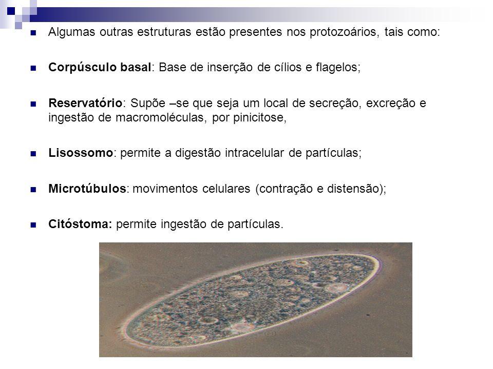 Algumas outras estruturas estão presentes nos protozoários, tais como: