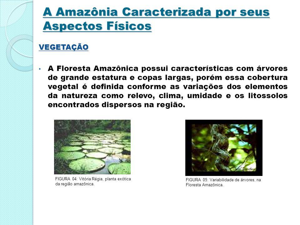 A Amazônia Caracterizada por seus Aspectos Físicos