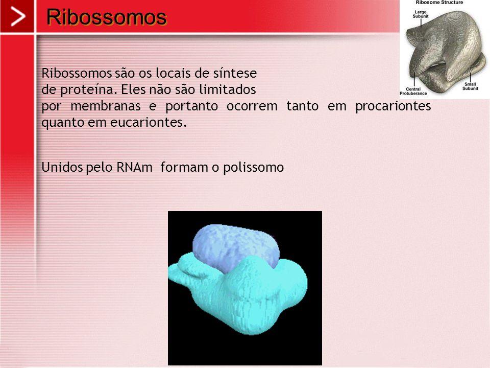 Ribossomos Ribossomos são os locais de síntese