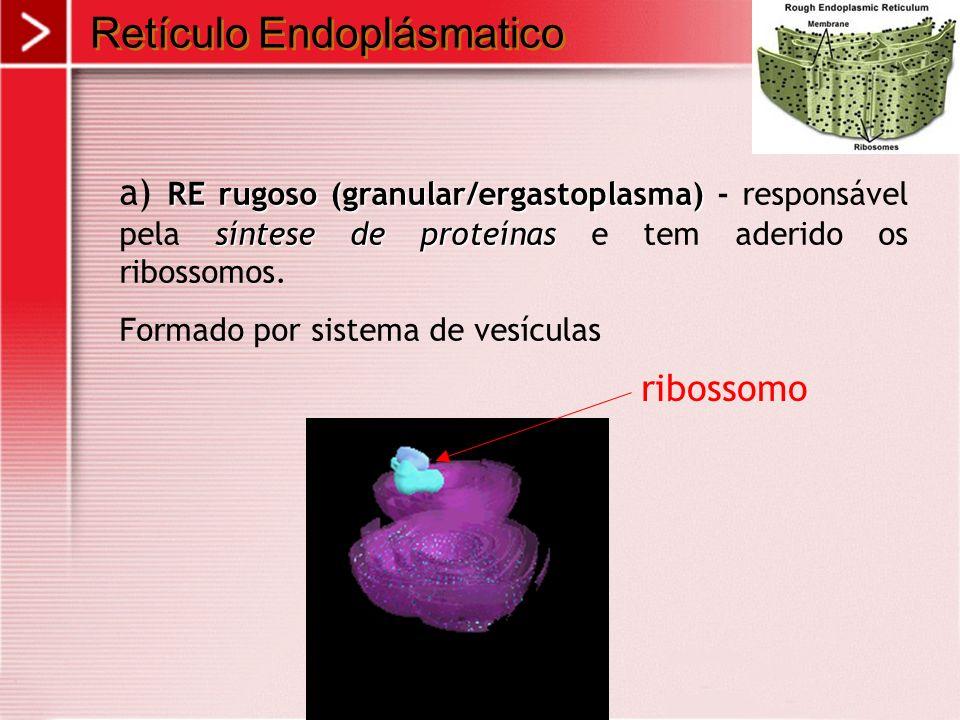 Retículo Endoplásmatico