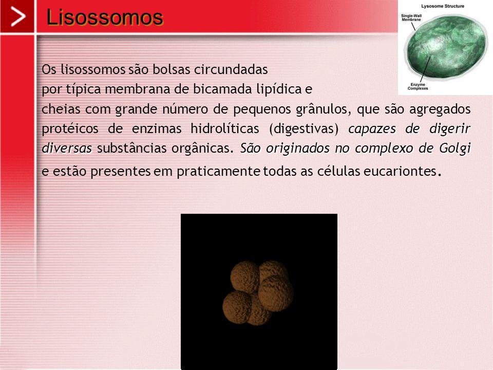 Lisossomos Os lisossomos são bolsas circundadas