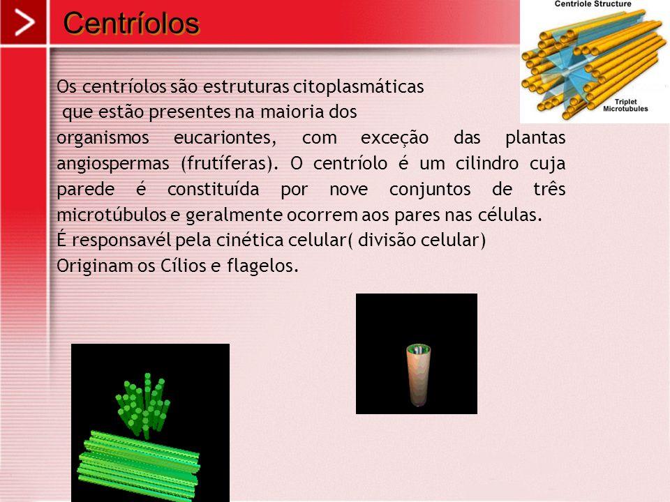 Centríolos Os centríolos são estruturas citoplasmáticas