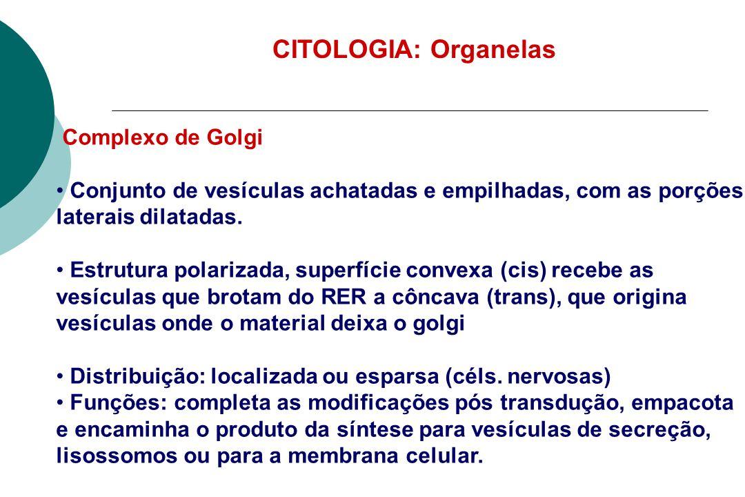 CITOLOGIA: Organelas Complexo de Golgi