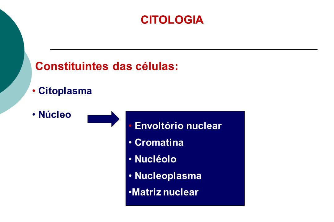 Constituintes das células:
