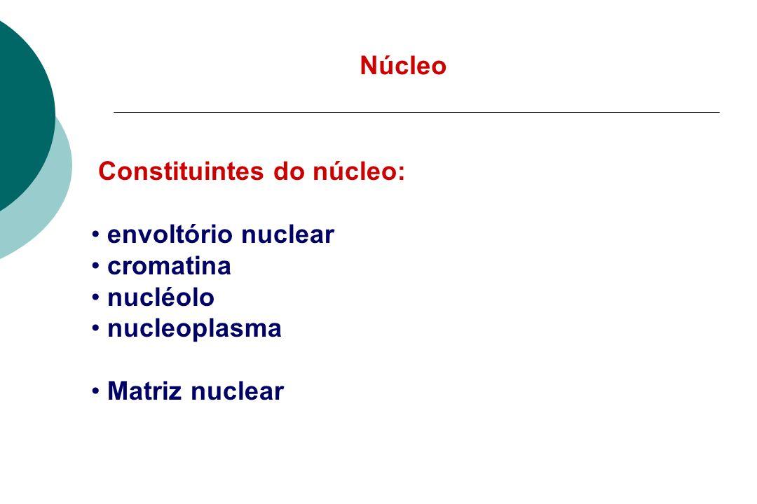 Núcleo Constituintes do núcleo: envoltório nuclear cromatina nucléolo nucleoplasma Matriz nuclear