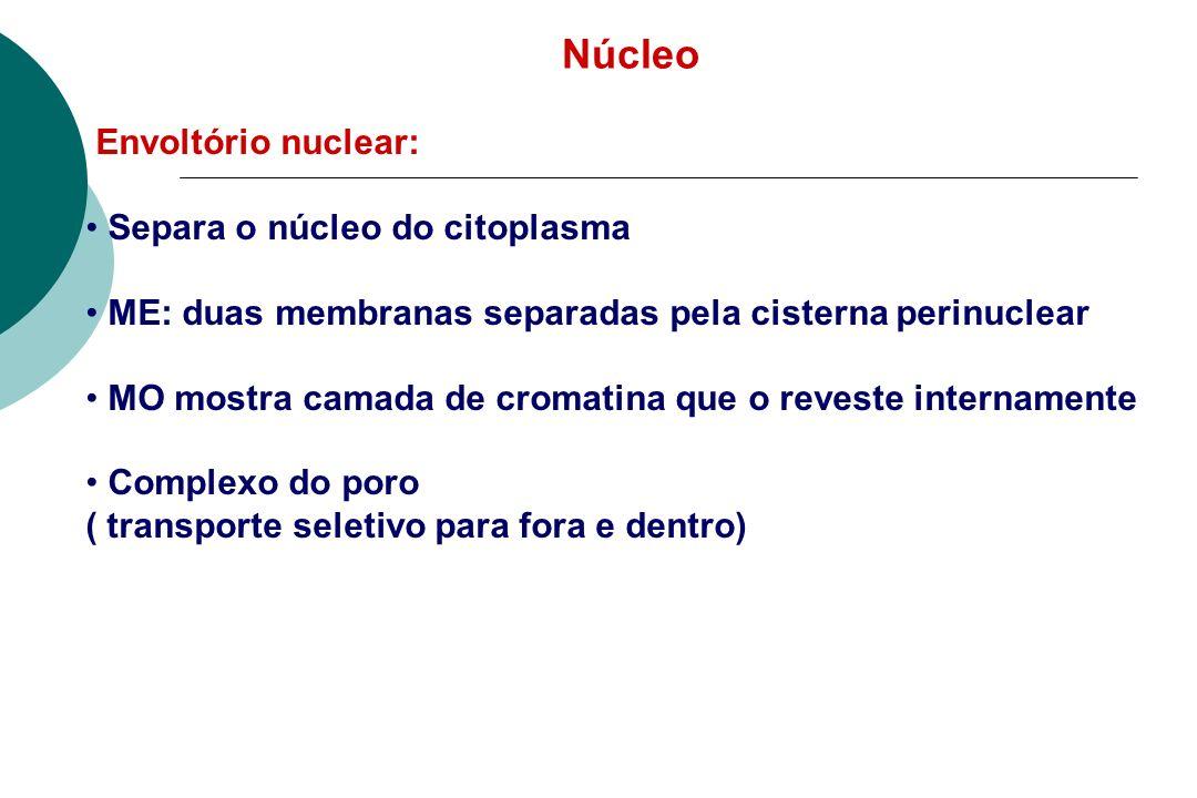 Núcleo Envoltório nuclear: Separa o núcleo do citoplasma