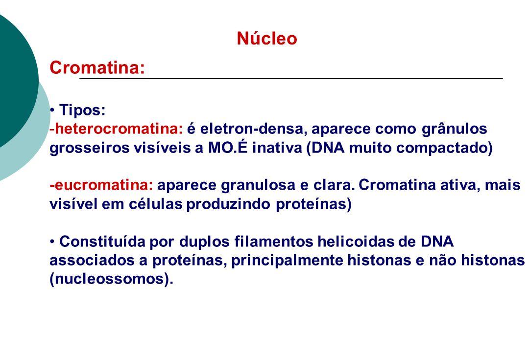 Núcleo Cromatina: Tipos:
