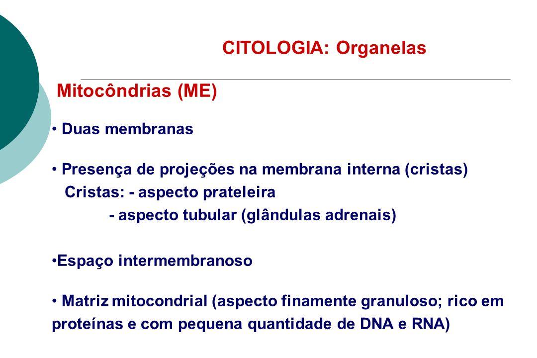 CITOLOGIA: Organelas Mitocôndrias (ME) Duas membranas