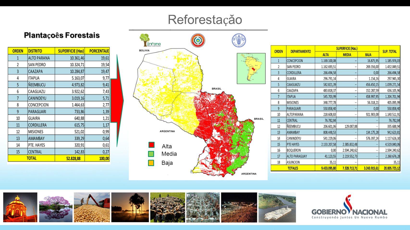 Reforestaҫǎo Plantaҫoȇs Forestais Alta Media Baja 28