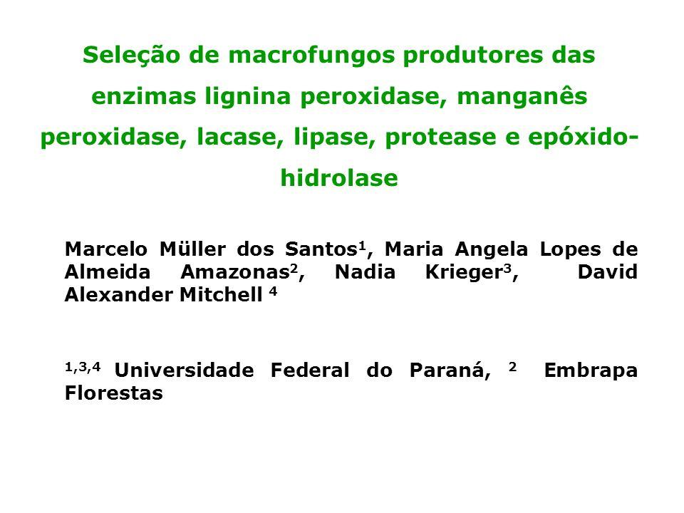 Seleção de macrofungos produtores das enzimas lignina peroxidase, manganês peroxidase, lacase, lipase, protease e epóxido-hidrolase
