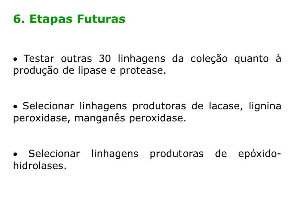 6. Etapas Futuras  Testar outras 30 linhagens da coleção quanto à produção de lipase e protease.