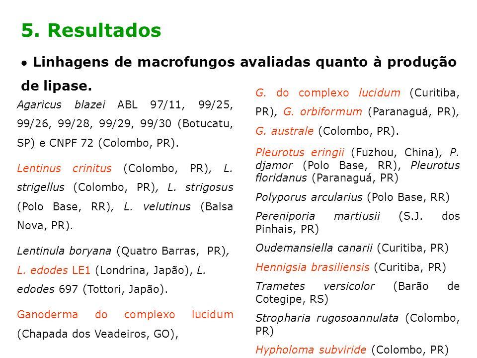 5. Resultados  Linhagens de macrofungos avaliadas quanto à produção de lipase.