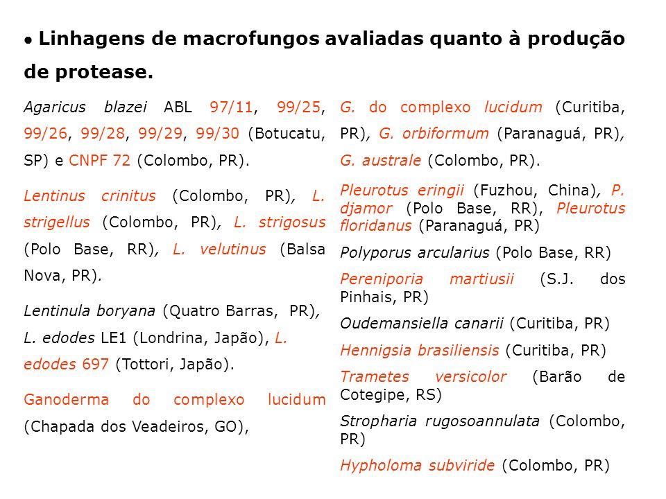  Linhagens de macrofungos avaliadas quanto à produção de protease.