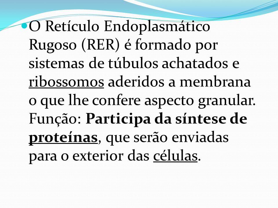 O Retículo Endoplasmático Rugoso (RER) é formado por sistemas de túbulos achatados e ribossomos aderidos a membrana o que lhe confere aspecto granular.