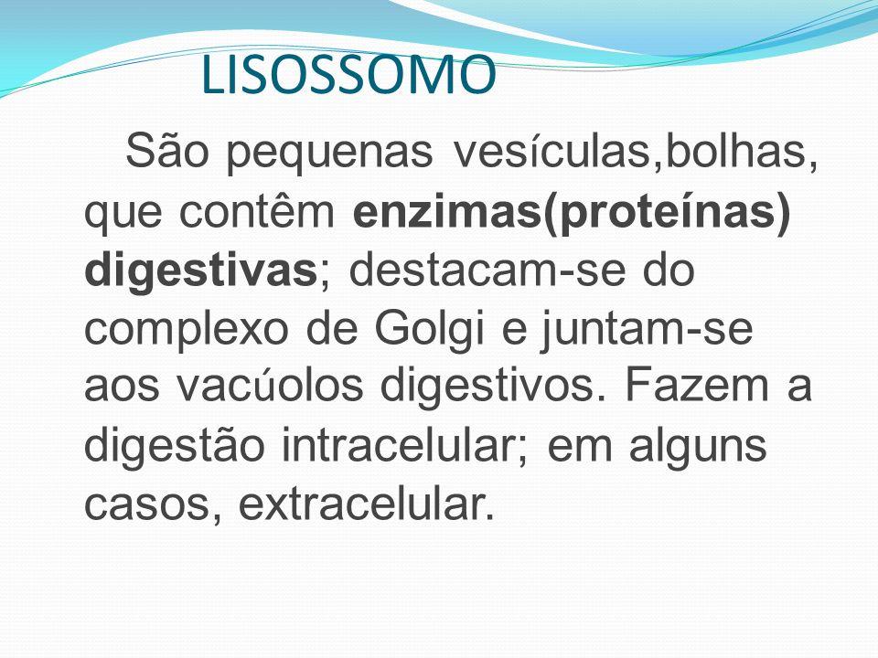 LISOSSOMO