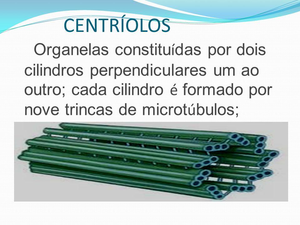 CENTRÍOLOS Organelas constituídas por dois cilindros perpendiculares um ao outro; cada cilindro é formado por nove trincas de microtúbulos;