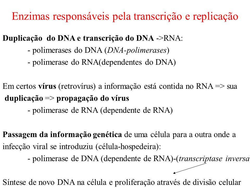 Enzimas responsáveis pela transcrição e replicação