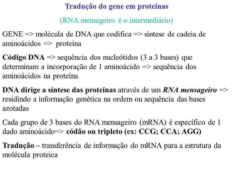 Tradução do gene em proteínas