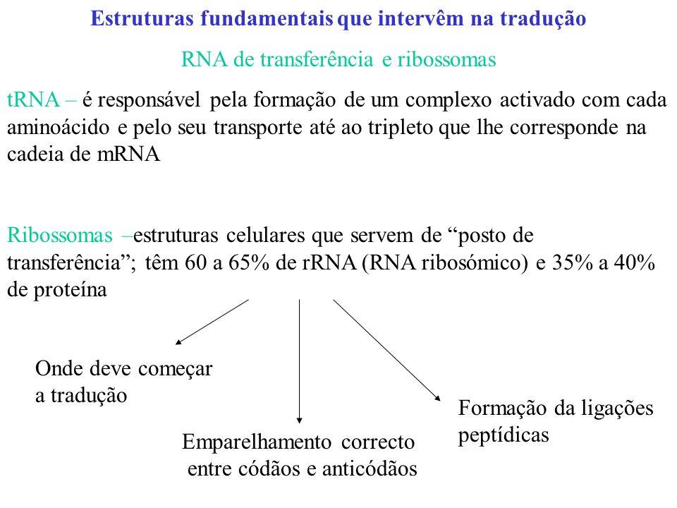 Estruturas fundamentais que intervêm na tradução