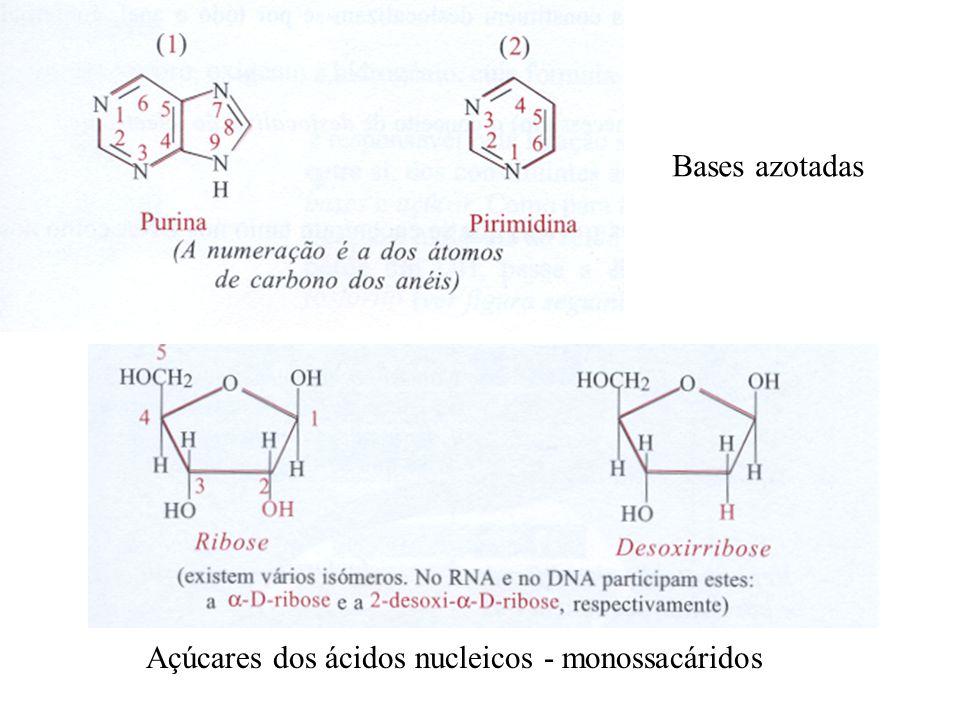 Bases azotadas Açúcares dos ácidos nucleicos - monossacáridos