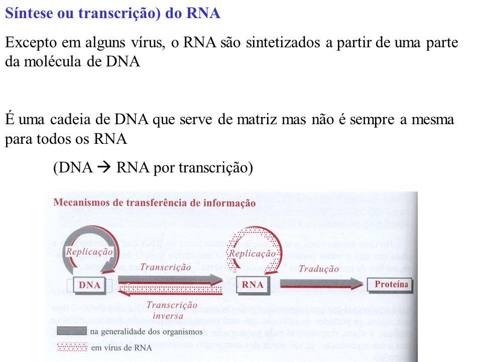 Síntese ou transcrição) do RNA