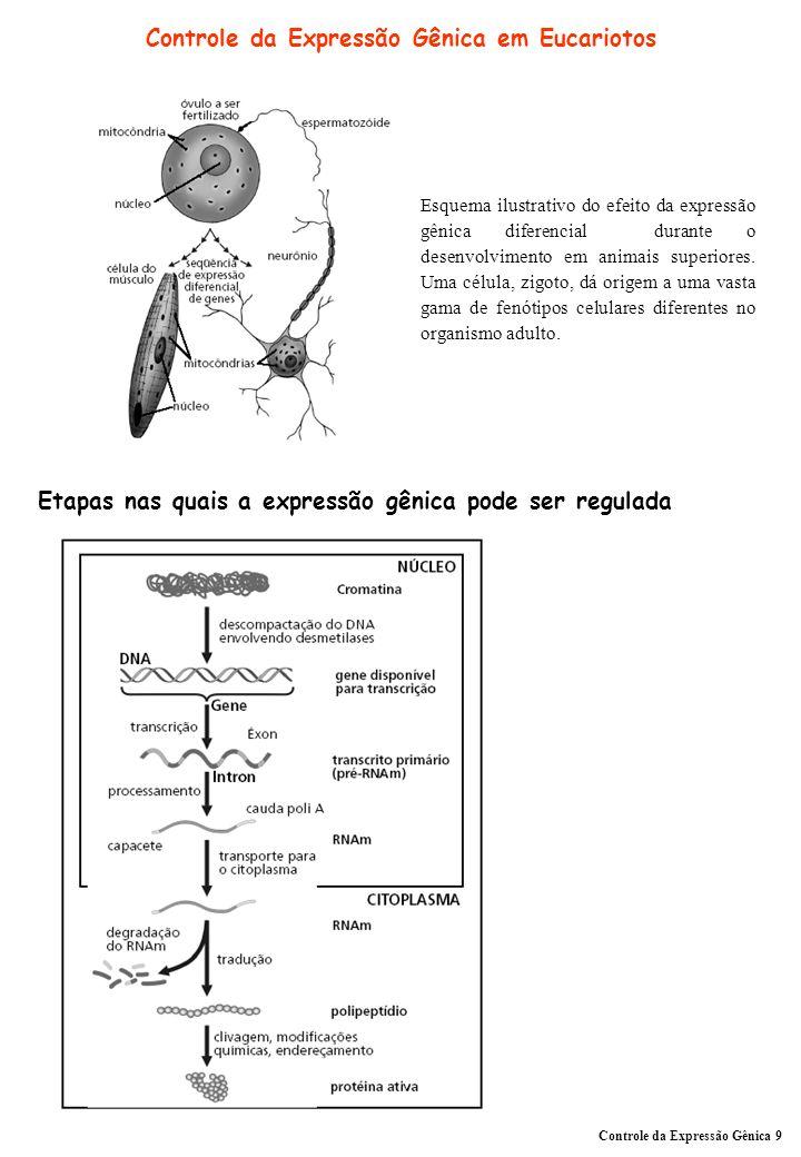 Controle da Expressão Gênica em Eucariotos