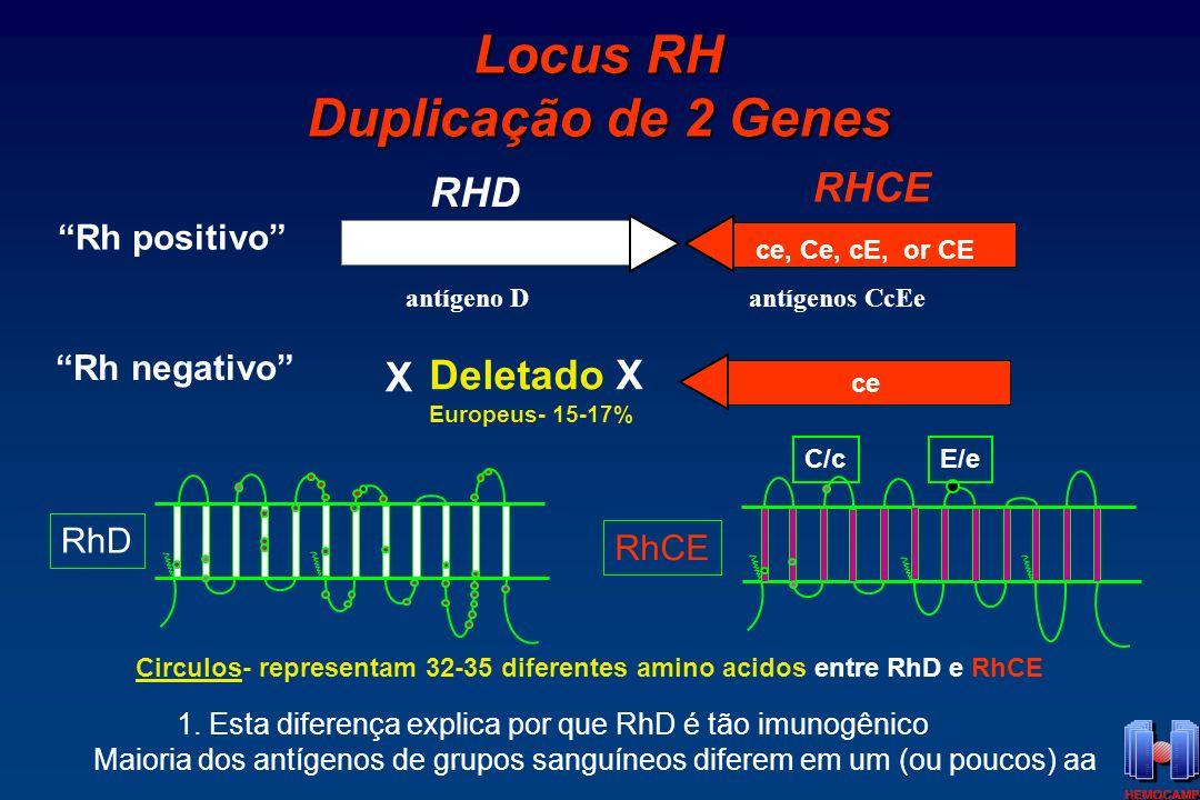 Locus RH Duplicação de 2 Genes