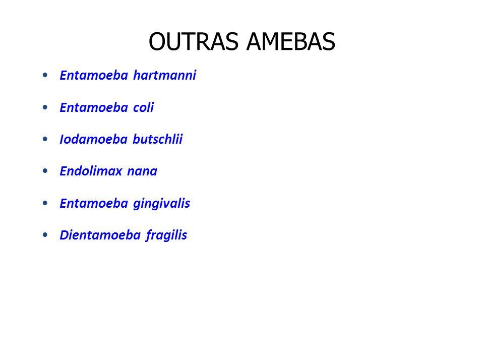 OUTRAS AMEBAS Entamoeba hartmanni Entamoeba coli Iodamoeba butschlii