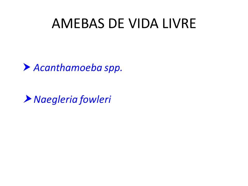 AMEBAS DE VIDA LIVRE  Acanthamoeba spp.  Naegleria fowleri