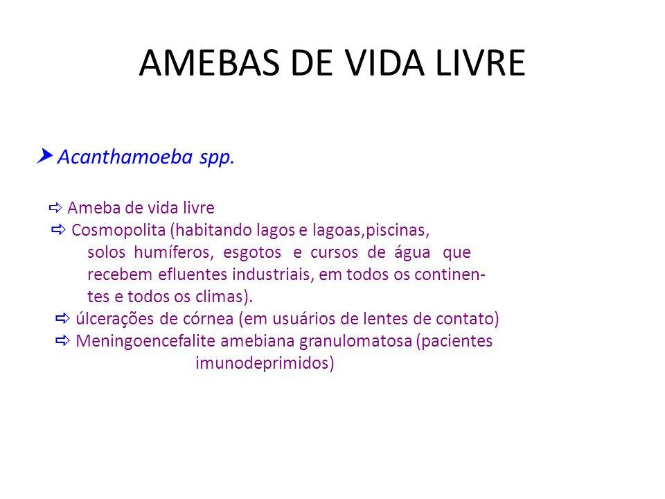 AMEBAS DE VIDA LIVRE  Acanthamoeba spp.