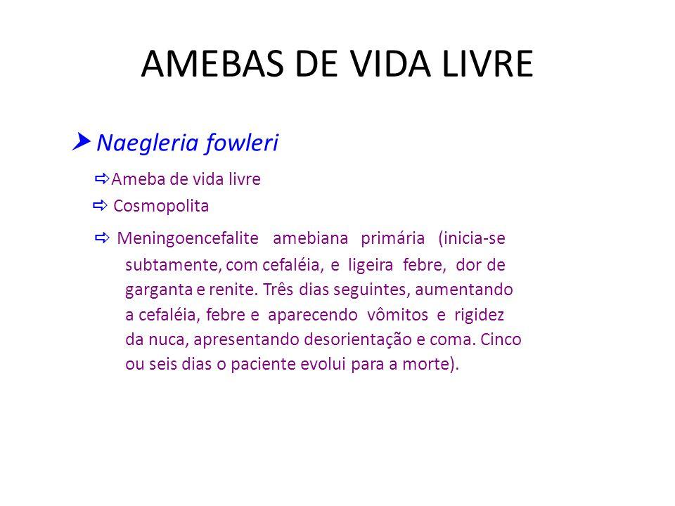 AMEBAS DE VIDA LIVRE  Naegleria fowleri Ameba de vida livre