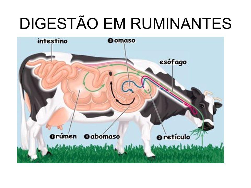 DIGESTÃO EM RUMINANTES