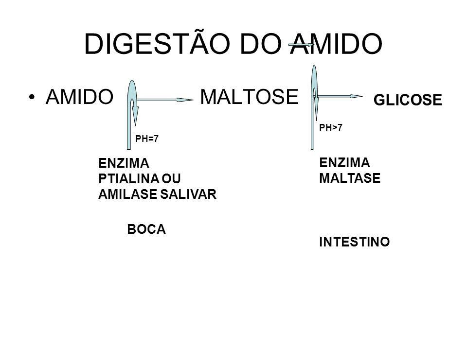 DIGESTÃO DO AMIDO AMIDO MALTOSE GLICOSE ENZIMA MALTASE ENZIMA