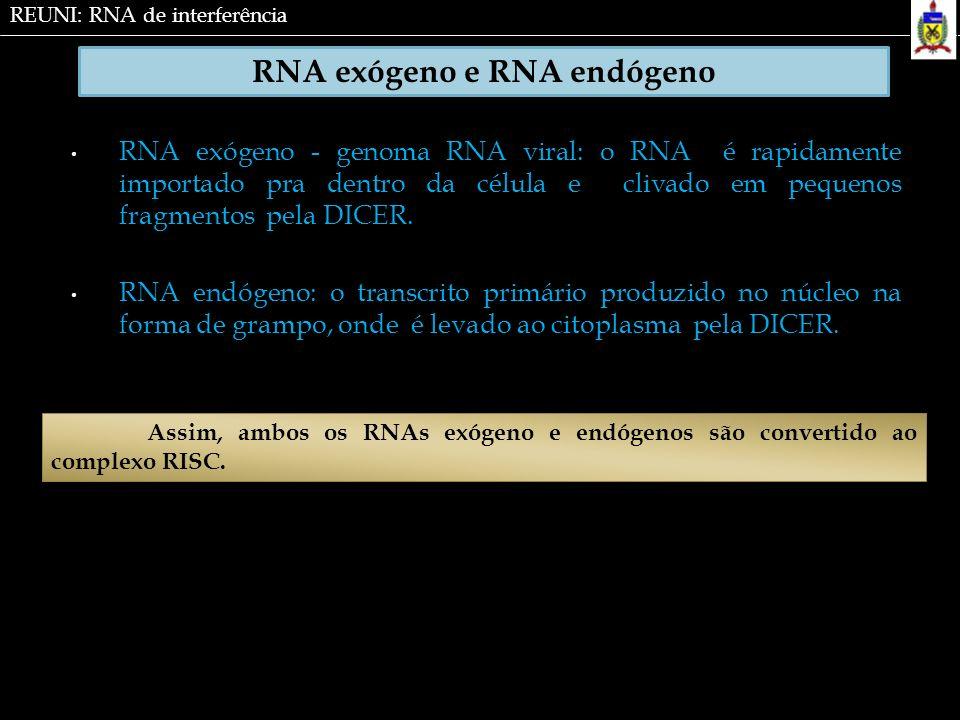 RNA exógeno e RNA endógeno