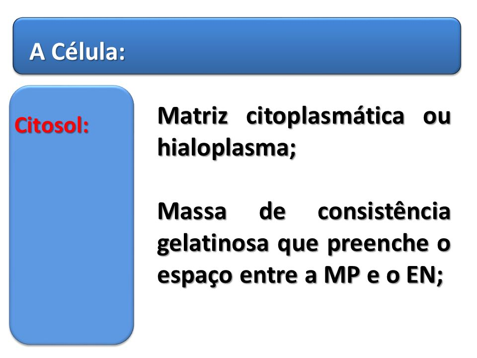 Matriz citoplasmática ou hialoplasma;