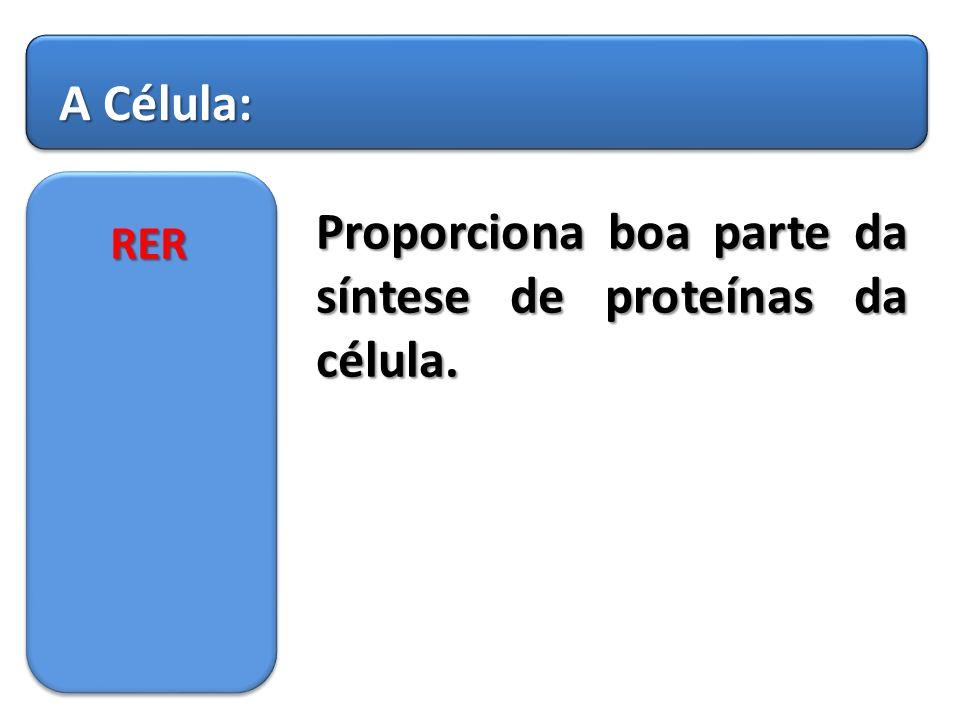 Proporciona boa parte da síntese de proteínas da célula.