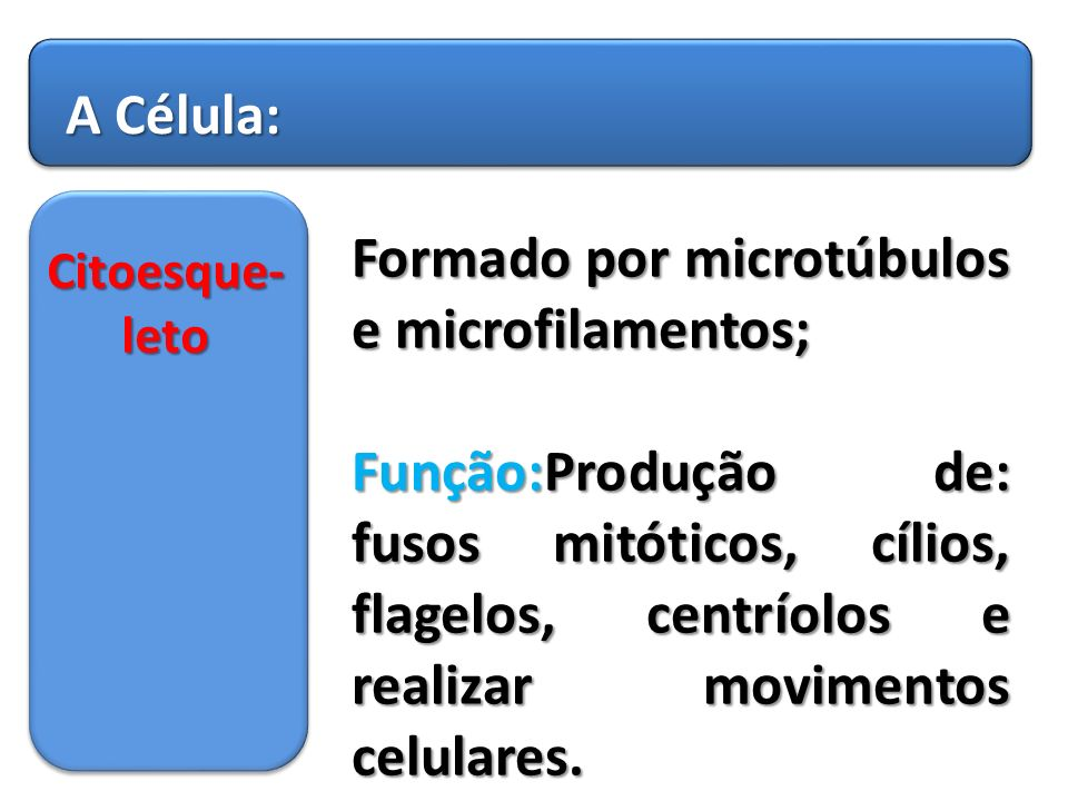 Formado por microtúbulos e microfilamentos;
