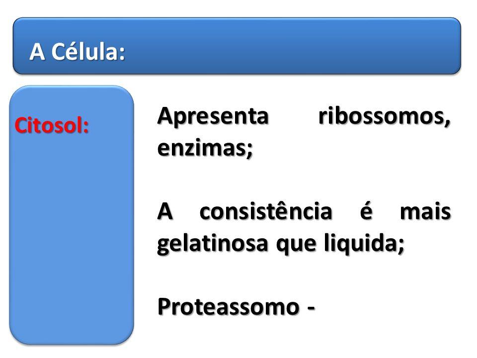 Apresenta ribossomos, enzimas;