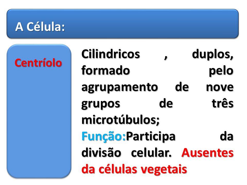 Função:Participa da divisão celular. Ausentes da células vegetais