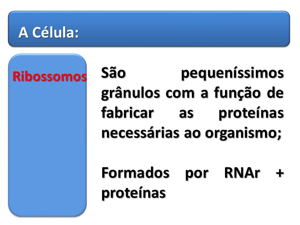 Formados por RNAr + proteínas