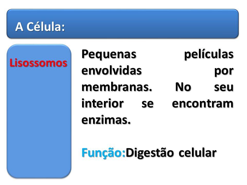 Função:Digestão celular