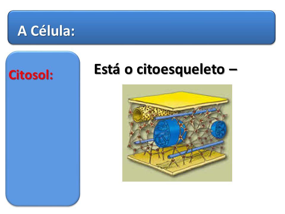 A Célula: Está o citoesqueleto – Citosol: