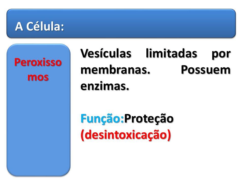 Vesículas limitadas por membranas. Possuem enzimas.