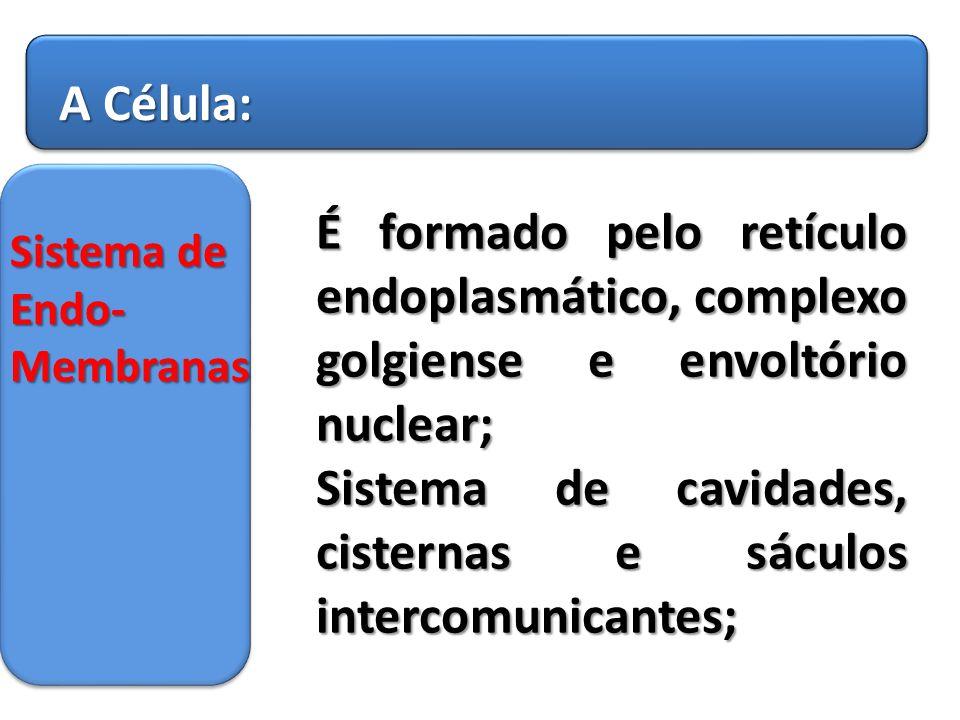 Sistema de cavidades, cisternas e sáculos intercomunicantes;