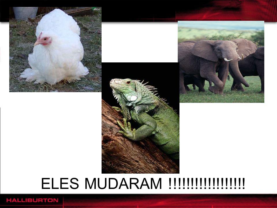 ELES MUDARAM !!!!!!!!!!!!!!!!!!