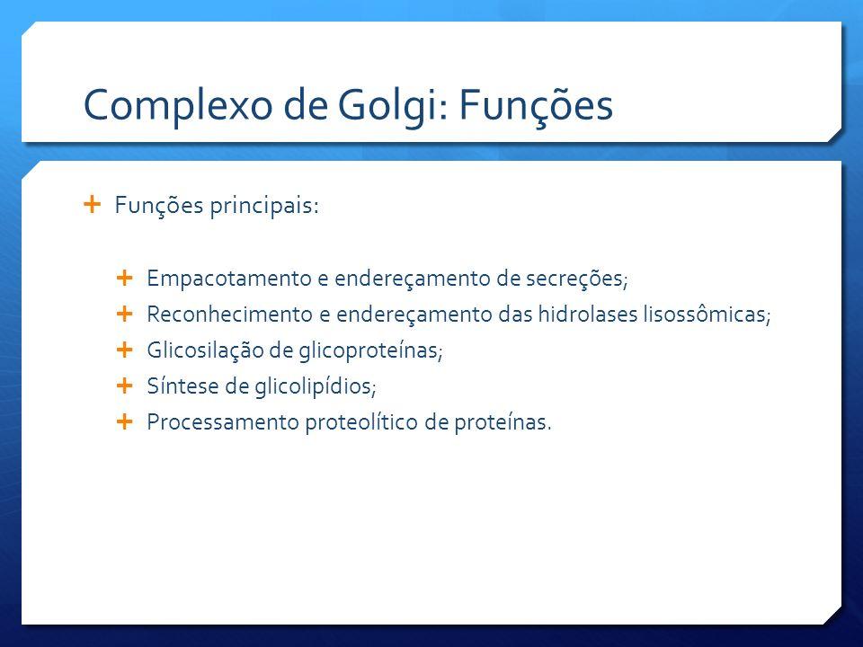 Complexo de Golgi: Funções