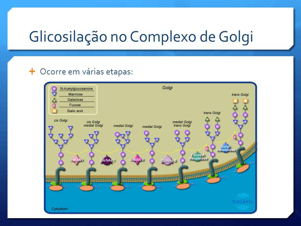 Glicosilação no Complexo de Golgi