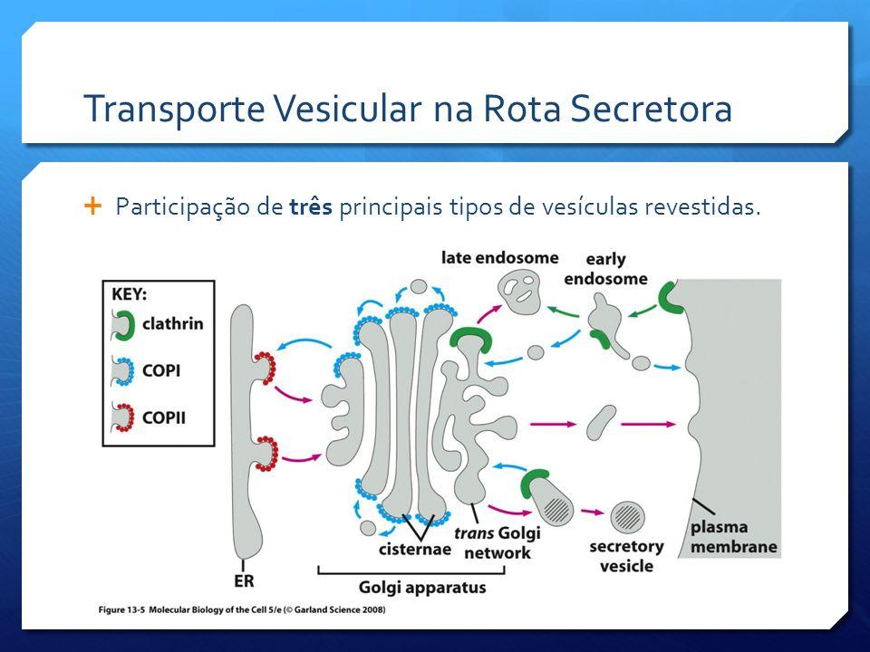 Transporte Vesicular na Rota Secretora