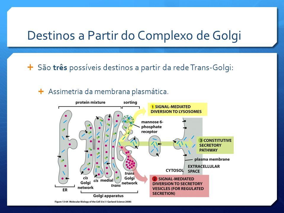 Destinos a Partir do Complexo de Golgi