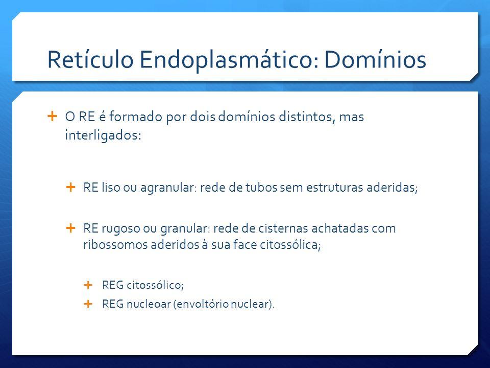Retículo Endoplasmático: Domínios